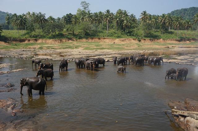 Circuit Sri Lanka Pinnawela