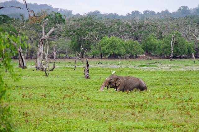 Circuit Sri Lanka Yala