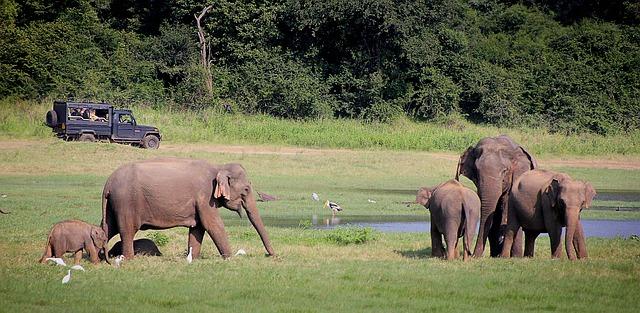 Circuit Sri Lanka Safari