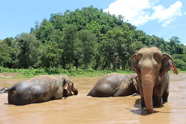Circuit Thailande Elephant Chiag mai